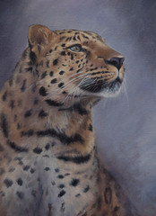 wild amur leopard portrait painted with oil paints on canvas - critically endangered species hand drawn artistic illustration