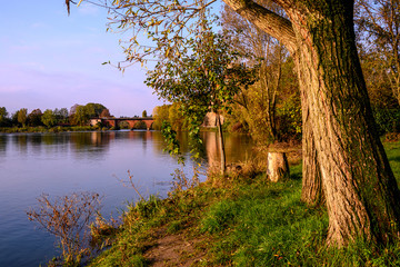 Walk at dawn amid the trees, branches and green leaves. In the background the water of the river Adda.