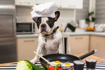 Papiers peints Bouledogue français French bulldog cook frying eggs in the kitchen
