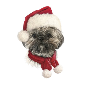 Chrysanthemum dog in a New Year hat and red scarf isolated on white background. Portrait of a lap dog in Christmas costume. Animal holiday art collection. Christmas and New Year card. Design template.
