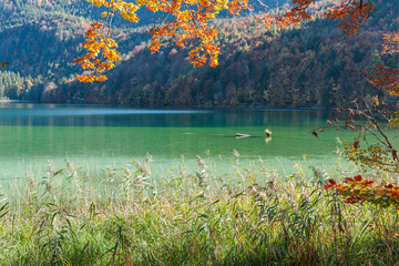 Autumn leaves on the shore of the Lake Alpsee