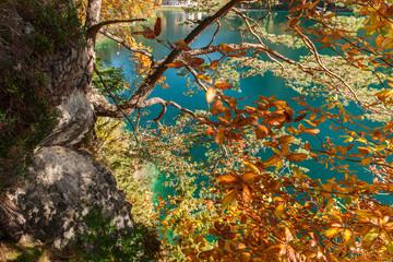 Gnarled tree at the Lake Alpsee