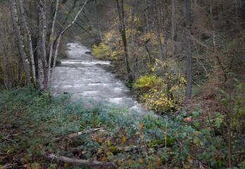 ein Bach in der Eifel in Deutschland