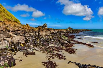 New Zealand, South Island. Otago Peninsula, Sandfly Bay. The seaweed on the Otago Peninsula is dominated by Southern Bull Kelp (Durvillaea species)