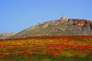 View of Star castle on the hilltop with a poppy field in the foreground, Teba, Andalusia, Spain.