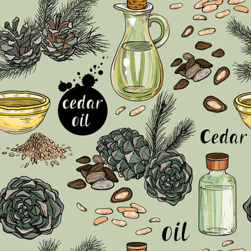 Samless pattern with cedar nuts, branch and oil. Cosmetics and food plant.
