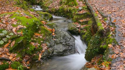 Panoramica di un ruscello che scorre nel bosco in autunno Wall mural