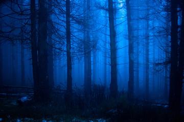 Blauer Nebelwald in der Nacht