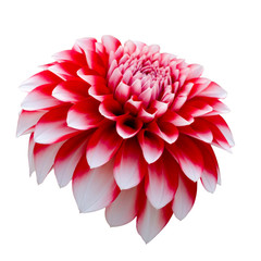 Spoed Fotobehang Dahlia Beautiful colorful dahlia flower isolated on a white background