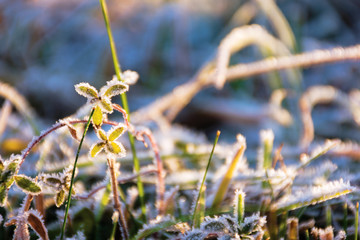 plants and grass in hoarfrost. glittering in sunlight scenery. sunny morning in countryside. beautiful close up nature background.