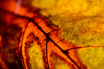 Macro Close Up of a Winter Fallen Leaf Rotting Abstract Background