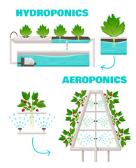 Hydroponics And Aeroponics Concept