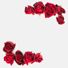 Photo sur Aluminium Roses Roses background with place for your text. 8 march, 14 february concept holiday.