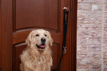 The dog is sitting near the door and is going to go for a walk on the street.