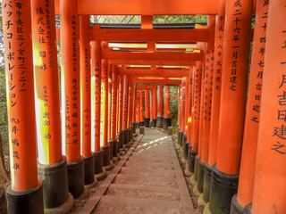 Tunel of Torii gates in Kyoto Japan