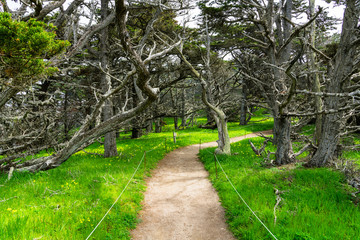 A hiking trail curves through lush green grass dotted with yellow wildflowers beneath a forest of gnarled cypress trees