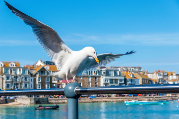 Seagull in a British seaside town setting.