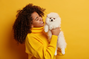 Positive Afro American woman holds obedient miniature dog on hands, spends day off with favourite pet, bought animal in pet store, isolated over yellow background. Having nice time together.