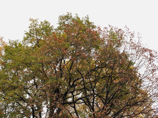 tree top in fall with copy space