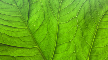 Wall Murals Nature Leaves close to green in the tropics