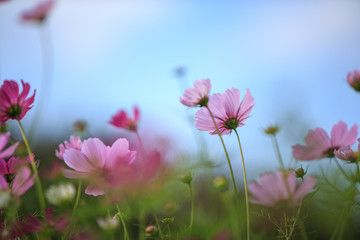 pink flowers on a background of blue sky