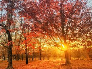 Photo sur Aluminium Brique autumn in the park