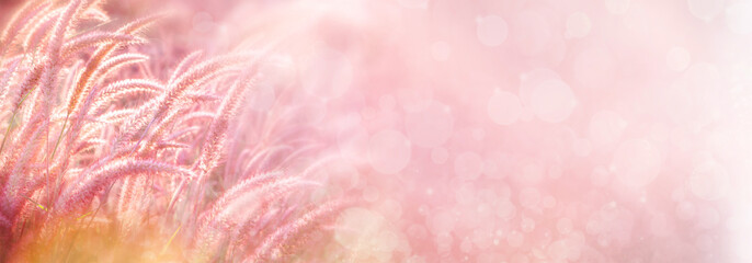 beautiful grass flower field in soft pink background for banner,header web