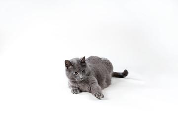 Einäugige Katze fährt beim spielen die Krallen aus