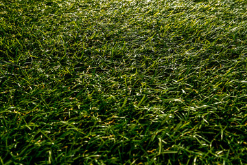 Background in the form of  grass on the lawn