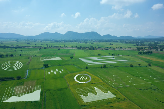 smart farm ,agriculture concept, farmer use data augmented mixed virtual reality integrate artificial intelligence combine deep, machine learning, digital twin, 5G, industry 4.0 technology to improve