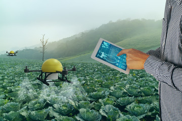 Wall Mural - iot smart agriculture industry 4.0 concept,Farmer use  drone (in precision farm) use for spray a water, fertilizer or chemical to the field, farm for growth a yields,crops, use for control, kill the b