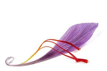 saffron petal with stigmas