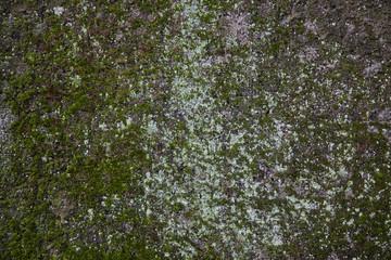 Grün bemooste Wand mit heller Flechte als Hintergrund