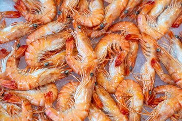Large fresh shrimps