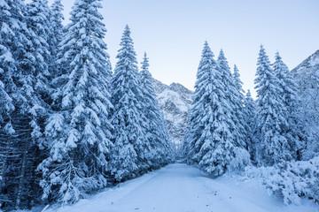 Scenic winter alpine background