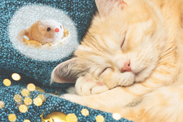 Cute cream cat sleeps on a blue plaid near Christmas decorations and sees a mouse in a dream