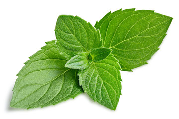 Mint isolated on white background clipping path. Green Mint leaves