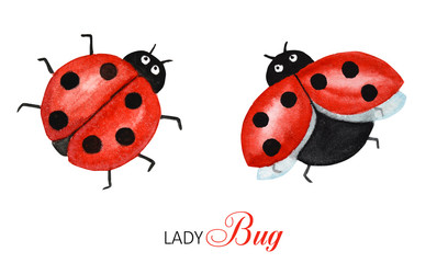 Watercolor ladybug set, flying bright cartoon insects. Funny red ladybird in flight. Greeting card concept with text. Isolated on white background