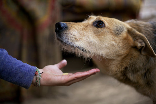 Children's hand holds out food to a stray dog in a shelter.