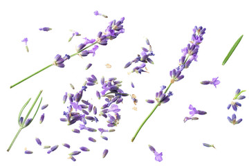 Fotobehang Lavendel lavender flowers isolated on white background. top view