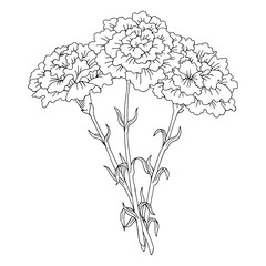 Carnation flower graphic black white isolated bouquet sketch illustration vector