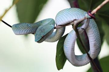 Viper im Gebüsch