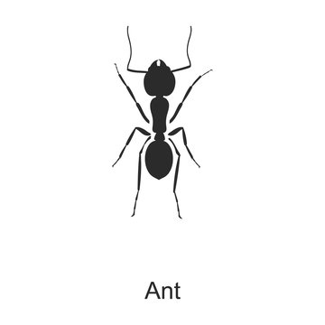 Insect ant vector icon.Black vector icon isolated on white background insect ant.