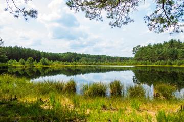 Jezioro stawek łąka drzewa las mokradła