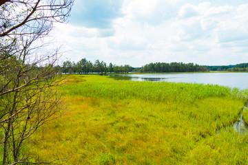 Jezioro łąka drzewa las mokradła