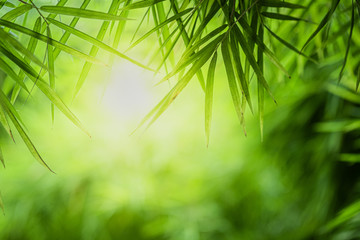 Closeup beautiful view of nature green bamboo leaf on greenery blurred background with sunlight and copy space. It is use for natural ecology summer background and fresh wallpaper concept.