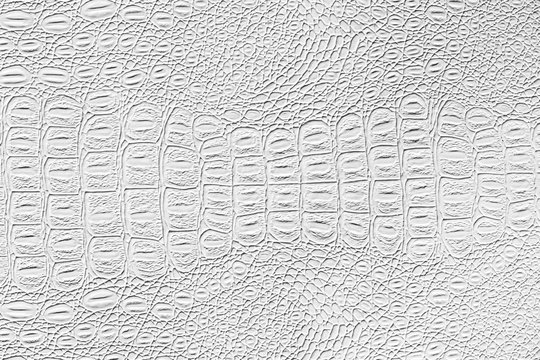 White crocodile leather texture. Abstract backdrop for design with copy space for a text.