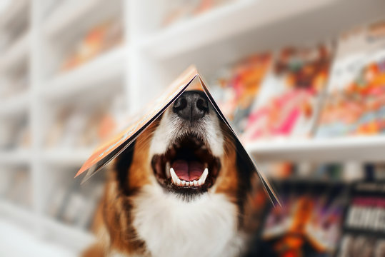 happy dog holds a magazine on his head in a store
