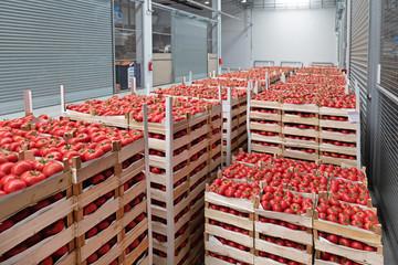 Wholesale Tomato