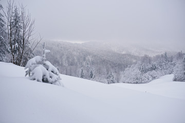 Fototapete - Snow covered scenic forest and mountains in winter